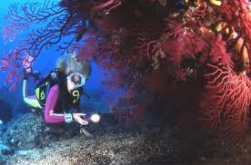 Submarinisme